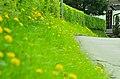 Siegen, Germany - panoramio (9).jpg
