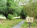 Singapore Botanic Gardens, Bamboos 5, Sep 06.JPG