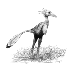Illustration av Sinornithoides.