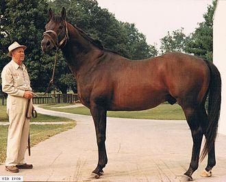 Sir Ivor - Sir Ivor at Claiborne Farm in 1981
