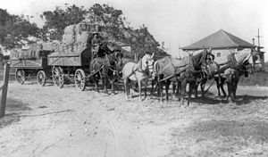Fountain Valley, California - Hauling hay in Talbert
