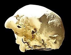 Skull4 bottom Sima de los Huesos.jpg