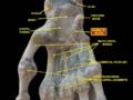 Slide3dsds - Hamate bone.png