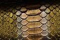 Snake Skin Texture (19).jpg