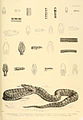 Snakes by Albert Gunther (2).jpg