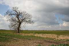 Solitary Tree - geograph.org.uk - 372934.jpg