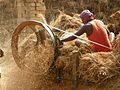 Somewhere in Bihar 07 threshing (31285110604).jpg
