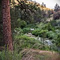 South Fork John Day Wild and Scenic River (36433947795).jpg