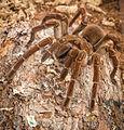 Spider14.jpg