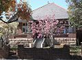Spring arrives at 53 Dudley St Haberfield 023-M.jpg