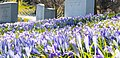 Spring has Sprung (16865335402).jpg