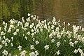 Spring in London (6970540148).jpg