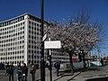 Spring in Waterloo Road - geograph.org.uk - 1802128.jpg