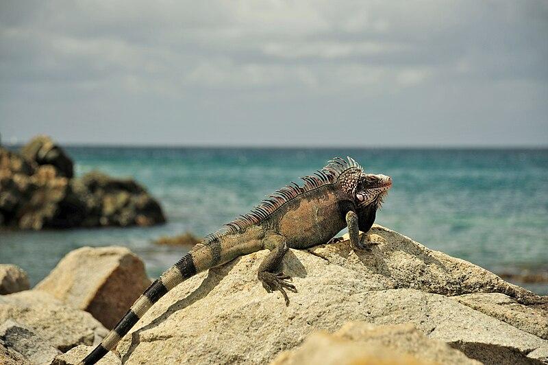 Marriott Us Virgin Islands St Croix