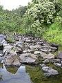 Starr-040713-0038-Aleurites moluccana-view stream-Kopiliula-Maui (24086190594).jpg