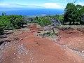 Starr-180820-0302-Syzygium cumini-habit with erosion-Kipahulu Forest Reserve-Maui (44706294621).jpg