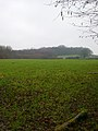 Starvecrow Wood - geograph.org.uk - 121105.jpg