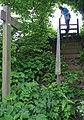 Steps down to the Gilbert's End Road - geograph.org.uk - 809420.jpg