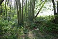 Stile at corner of Frenchay Wood - geograph.org.uk - 410204.jpg