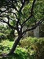 Stokesay Castle, the dry moat - geograph.org.uk - 1507328.jpg