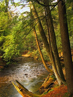 Farmington Township, Clarion County, Pennsylvania - Cook Forest State Park