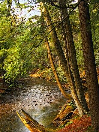 Farmington Township, Clarion County, Pennsylvania - Cook Forest State Park