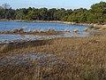 Strijbeekse Heide File106.jpg