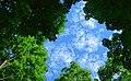 Stromberg trees and sky.jpg