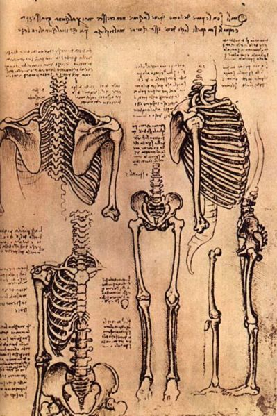 anatomy sketches by Leonardo da Vinci