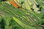 Rice Terraces in southern China.