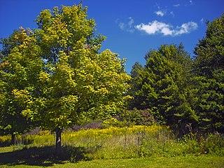 Steuben Township, Crawford County, Pennsylvania Township in Pennsylvania, United States