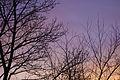 Sunset (3280997496).jpg