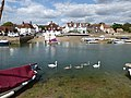 Swans in Emsworth, Hampshire (geograph 5068837).jpg