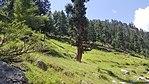 Swat valley side at Utrar road KPK Pakistan 5.jpg
