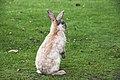 Sweet bunny in grass.jpg