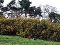 Tête à tête on the Heath - geograph.org.uk - 376211.jpg