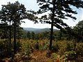 Talimena Scenic Drive (Quachita National Forest) - panoramio (9).jpg