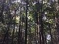 Tangkiling Nature 11.jpg