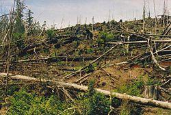 Tasmania logging 10 Styx Devastation.jpg