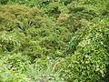 Taysan,Lobo,Batangasjf9639 08.JPG