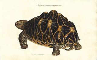 <i>The Zoological Journal</i>