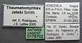 Thaumatomyrmex atrox casent0178702 label 1.jpg