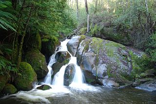 Yarra Ranges National Park Protected area in Victoria, Australia