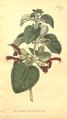 The Botanical Magazine, Plate 376 (Volume 11, 1797).png