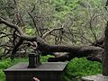 The Fallen Tree.jpg