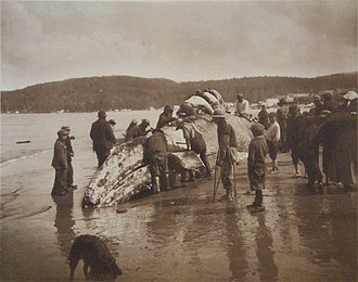Makah - Makah whalers, circa 1910.