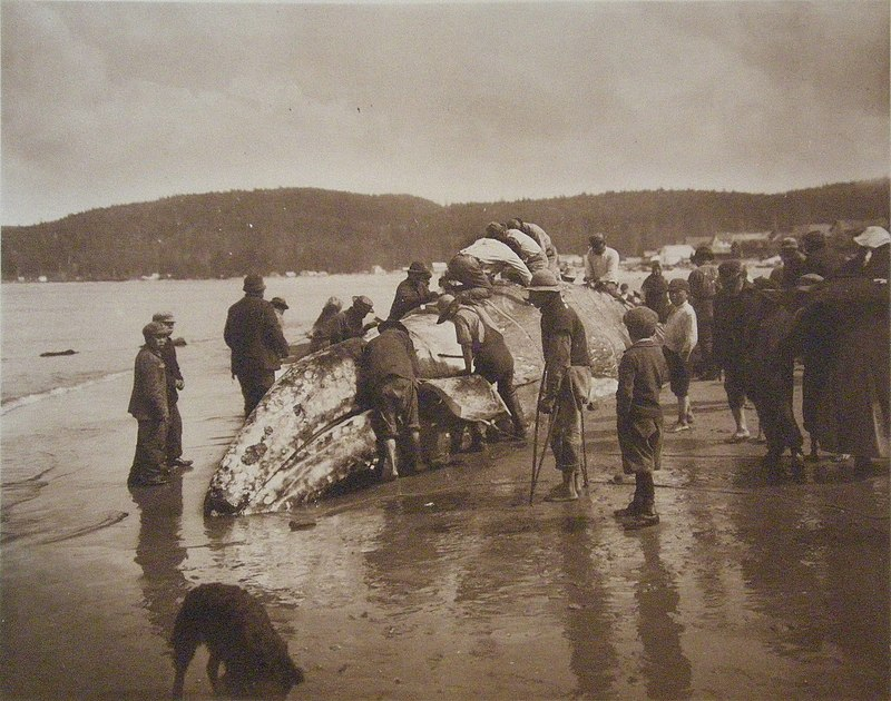 The King of the Seas in the Hands of the Makahs - 1910.jpg