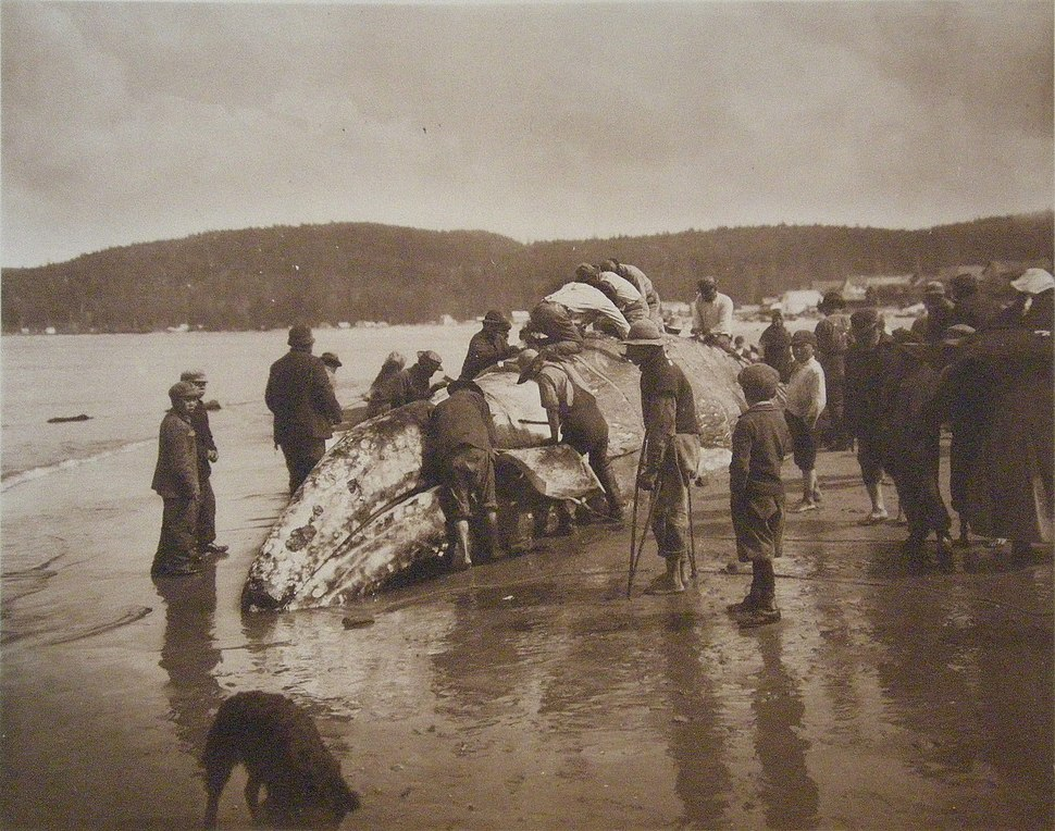 The King of the Seas in the Hands of the Makahs - 1910