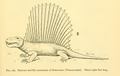 The Osteology of the Reptiles-247 vghuj vbnm jh.png