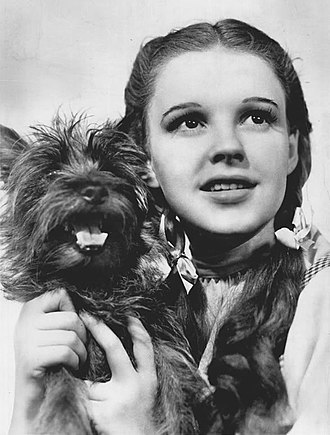 The Wizard of Oz (1939 film) - Stars Judy Garland as Dorothy Gale and Terry The Dog, as Toto